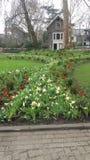 mały ogród Fotografia Royalty Free
