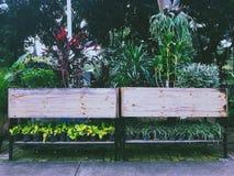 mały ogród zdjęcia royalty free
