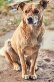 Mały osamotniony pies Zdjęcia Stock