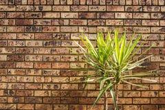 Mały Palmowy Tree& x27; s Obraz Royalty Free