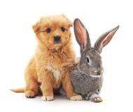 Mały pies i królik Zdjęcie Stock
