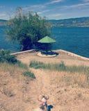 Mały psi patrzeje parasol i jeziora widok Zdjęcia Royalty Free