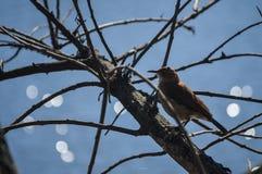 Mały ptak Zdjęcia Stock