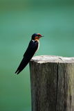 Mały ptak na fiszorku Fotografia Stock