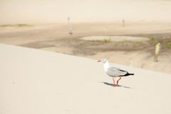 Mały ptak sunbathing obrazy royalty free