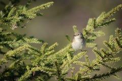 Mały ptasi obsiadanie Zdjęcia Stock