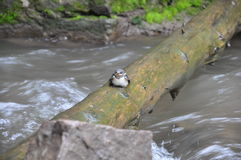Mały ptasi obsiadanie na beli Zdjęcie Stock