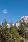 Mały sosnowy las Zdjęcia Royalty Free