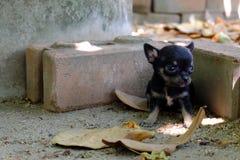 mały szczeniak Zdjęcia Stock