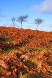 mały trzy drzewa Obraz Royalty Free