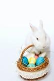 Mały Wielkanocny królik w koszu Fotografia Stock