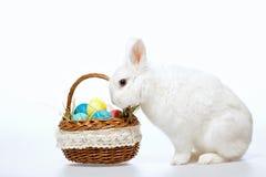 Mały Wielkanocny królik w koszu Zdjęcie Stock