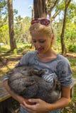 Mały Wombat dosypianie Obrazy Stock