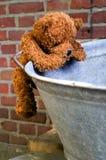 mały wspinaczkowy teddybear obrazy stock