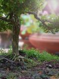 Mały zielony drzewo w lato ogródzie Obraz Stock