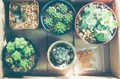 Mały zielony kaktus Zdjęcie Royalty Free