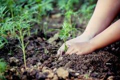 Mała dziewczynka pomaga rodzic zasadzać drzewa w ogródzie Zdjęcia Stock