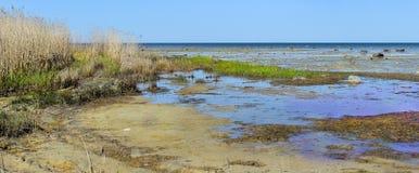 Maagdelijk moeras panoramisch zeegezicht met blauwe hemel Royalty-vrije Stock Fotografie