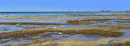 Maagdelijk moeras panoramisch zeegezicht met kleine eilanden in Estland Stock Fotografie