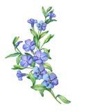 maagdenpalm Tak van eerste de lentebloemen - VÃnca-mÃnor stock illustratie
