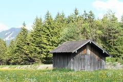 Maai in Alpen stock foto's