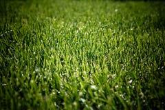 Maai gras speelgebied met donkere randen als achtergrond stock afbeelding