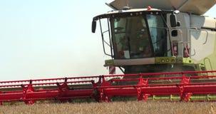 Maaidorser in actie betreffende tarwegebied Het oogsten is het proces om een rijp gewas van de gebieden te verzamelen ProRes stock videobeelden