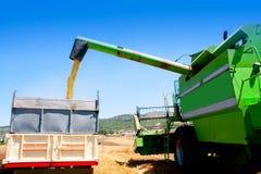 Maaidorser het leegmaken tarwe in vrachtwagen Royalty-vrije Stock Foto