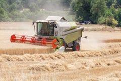 Maaidorser het oogsten tarwe voor de wintervoer voor livestoc Stock Afbeelding