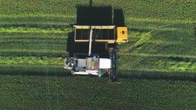 Maaidorser leegmaakt tarwe in het lichaam van de vrachtwagen stock videobeelden