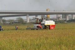Maaidorser op gebied het oogsten rijst Stock Foto