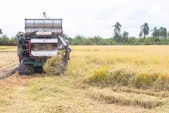 Maaidorsersmachine het oogsten padie royalty-vrije stock foto