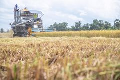 Maaidorsersmachine het oogsten padie royalty-vrije stock foto's
