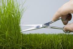 Maaimachine & natuurlijk gras Royalty-vrije Stock Foto