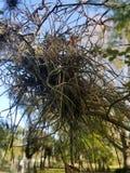 Maak een Nest stock afbeeldingen