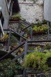 Maakt het groeien buiten in Limone, Garda-Meer, Italië groen Royalty-vrije Stock Afbeelding