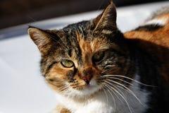 Maaloula Cat Stock Photo