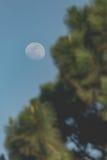 Maan achter een boom Royalty-vrije Stock Afbeeldingen