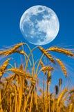 Maan boven een tarwegebied royalty-vrije stock afbeelding
