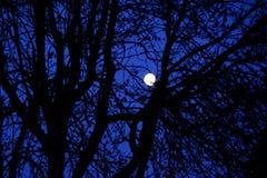 Maan door de bomen Stock Afbeelding
