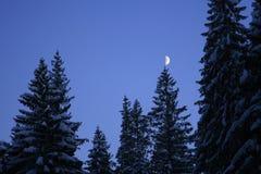 Maan op de boom Stock Afbeeldingen