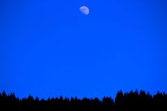 Maan over de bomen Stock Afbeeldingen