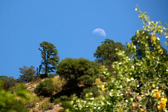 Maan over Heuvel Stock Afbeelding