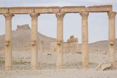 maan palmyraqalat för ibn Royaltyfria Bilder