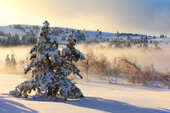 Mañana brumosa en el invierno Imagenes de archivo