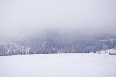 Mañana de niebla nevada del invierno de las montañas cárpatas ucrania Fotos de archivo libres de regalías