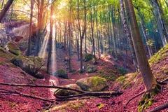 Mañana del otoño en bosque místico Foto de archivo libre de regalías