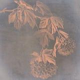 Maanbeschenen Hydrangea hortensia vector illustratie