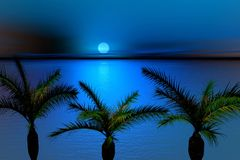 Maanbeschenen nacht en palmen Stock Afbeelding