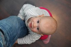 8 maand oude baby die omhoog op het vathersbeen opheffen Royalty-vrije Stock Afbeelding